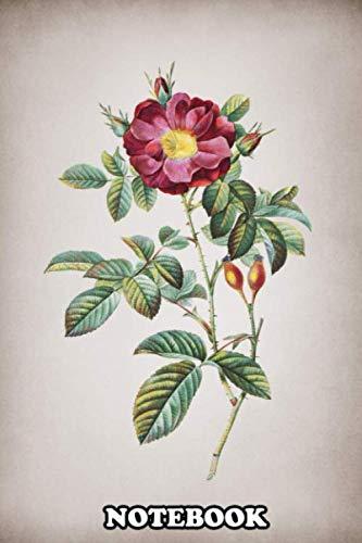 "Notebook: Vintage Botanical Illustrat Vintage Red Portland Rose , Journal for Writing, College Ruled Size 6"" x 9"", 110 Pages"