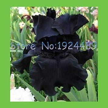Pinkdose 50pcs Iris Japoneses En Flor Flores De Orquideas Negras En