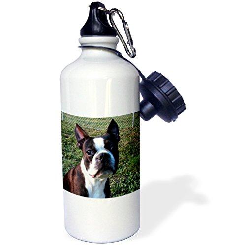 Boston Bottle 21 - 3dRose wb_49296_1