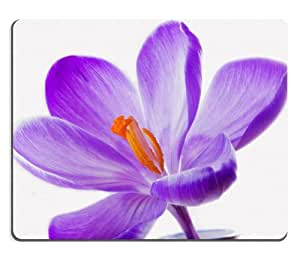 Purple Lily Flower Vase big orange center pretty Mouse Pads Customized Made to Order Support Ready 9 7/8 Inch (250mm) X 7 7/8 Inch (200mm) X 1/16 Inch (2mm) High Quality Eco Friendly Cloth with Neoprene Rubber Liil Mouse Pad Desktop Mousepad Laptop Mousepads Comfortable Computer Mouse Mat Cute Gaming Mouse_pad by runtopwell