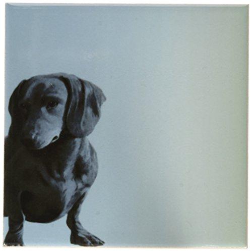 3dRose cst_130560_3 Adorable Daschund Dog Pets Animals Ce...