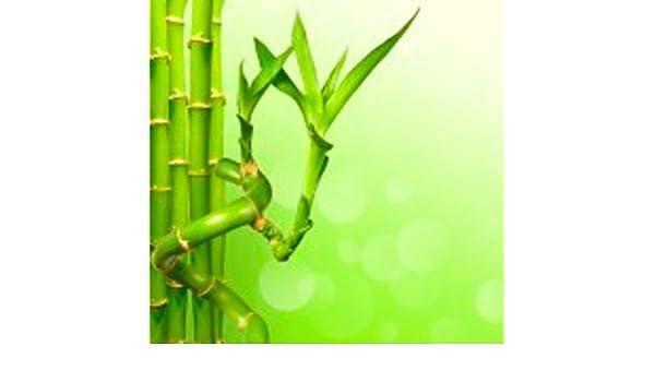 Caña de bambú espiral (40 cm) - Planta viva de interior: Amazon.es ...