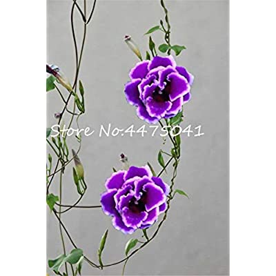 Hot 100 Pcs/Bag Mixed Climbing Gloxinia Flower Bonsai Perennial Flowering Plants Charming Sinningia Speciosa Bonsai Balcony - (Color: 11) : Garden & Outdoor