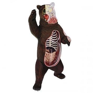 rompecabezas tridimensional 4D VISIoeN anatomia animal modelo de ...