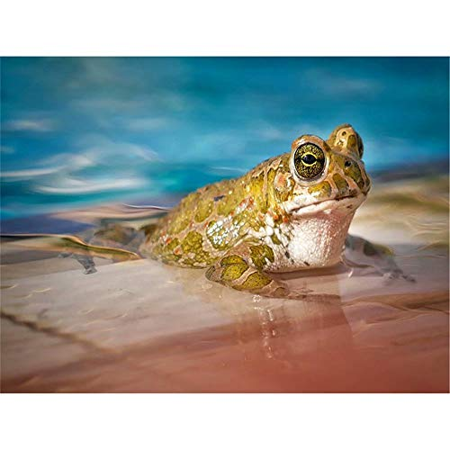 (5D Diy Diamond Painting - Resin Cross Stitch Kit - Crystals Embroidery - Home Decor Craft - Yellow Frog,9.8 X 11.8 Inch)