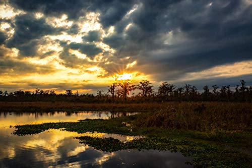 Southern Landscape Photography Art Print - Picture of Cypress Trees on Horizon and Winter Sunset on Louisiana Bayou Wetlands Decor 5x7 to 40x60