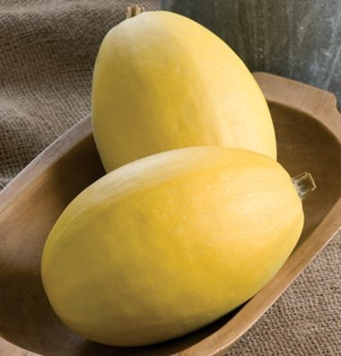 David's Garden Seeds Squash Winter Pinnacle D3839WE (Yellow) 25 Hybrid Seeds