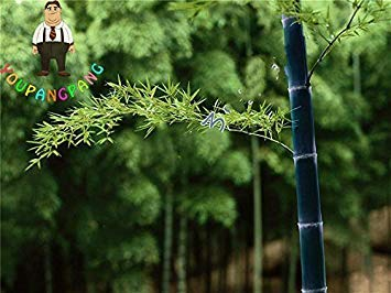 Pflanzen Mao Sementes Stã¼cke Bonsai Lady Riesen Samen 2017 Pubescens Neue Verkauf Baum Moso Garten nbsp;dunkelgrau Fash Bambus 50 Phyllostachys Jardin Fã¼r 7OqSHS