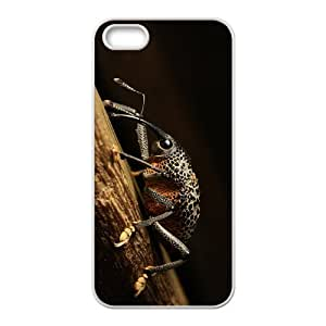 The Snout Beetle Hight Quality Plastic Case for Iphone 5s by lolosakes