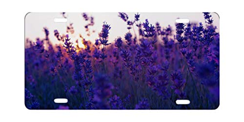 HVSWAHPOI Field Lavender Purple Flowers License Plate Frame Aluminium Novelty Auto Car Tag Vanity Gift
