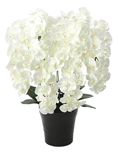 光触媒 造花 光の楽園 プレミアム胡蝶蘭5本立W 651A180 B01IGBUZMC 幅58cm ホワイト 5本立 ホワイト 幅58cm