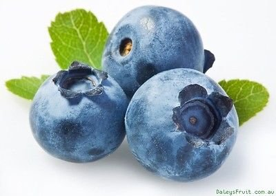 10 (TEN) Blueberry Plants - 1 year old rooted cuttings. 5...