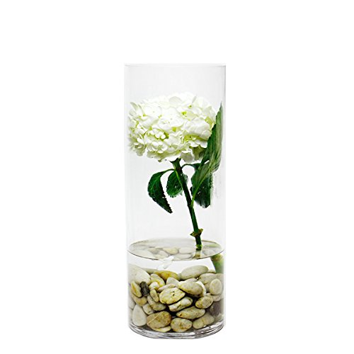 CYS Glass Cylinder Vase. H-16, Open D-6'' by CYS EXCEL