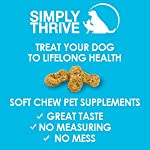 Turmeric Curcumin Supplement for Dogs | 90 ct Soft Chew Treats | Helps With Mobility Hip Joint & Arthritis | Coconut Oil Aids Digestion and Immunity | Natural Source of Antioxidant, Antiinflammatory 20