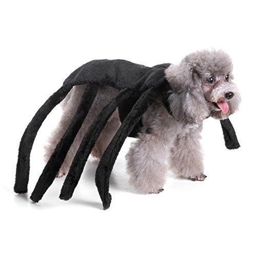 Alfie Pet by Petoga Couture - Piper Spider Costume - Color : Black, Size: Large -