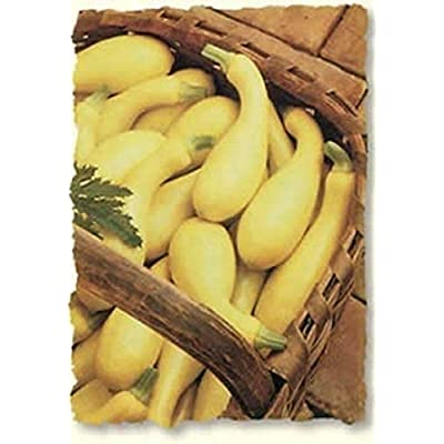 Dixie Hybrid Yellow Squash Seeds (20 Seed Pack) : Garden & Outdoor