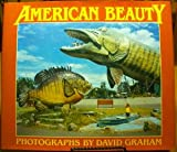 American Beauty (New Images Book)