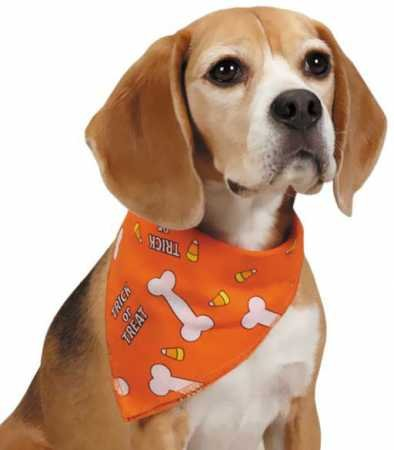 Aria Trick-or-Treat Dog Bandanas for Dogs,