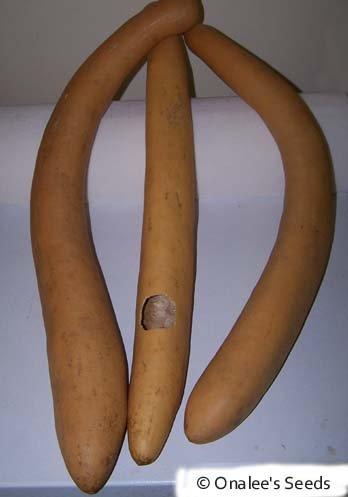 24+ Cucuzzi Seeds-italian Edible Gourd / Italian Squash by onaleei (Image #1)'