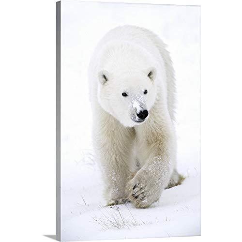 Polar Bear Walking Canvas Wall Art Print, 16