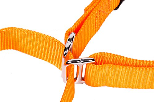 Pictures of GoGo Pet Products GoGo 3/8-Inch 15113 Orange 2