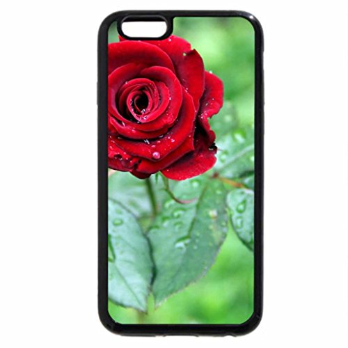 iPhone 6S Case, iPhone 6 Case (Black & White) - nature red roses love beauty