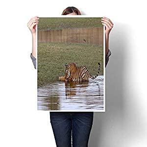 """smllmoonDecor Wall Decoration Tiger Cooling Off in a Lake at Ranthambhore National Park in Rajasthan India Decorative Fine Art Canvas Print Poster K 16"""" x L 20"""""""