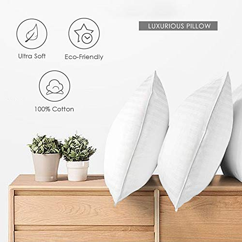 COZYDREAM Hotel Quality Pillows for Sleeping [Set of Two] Premium Plush Fiber, 100% Breathable Cotton Cover Skin-Friendly, Queen Size, 20'x30', White
