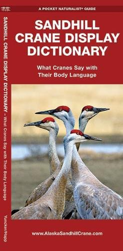 Sandhill Crane Display Dictionary: What Cranes Say With Their Body Language (A Pocket Naturalist Guide)