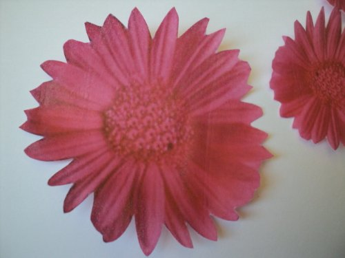 Amazon.com : 14 Edible Flowers PINK GERBERA DAISY In 4 Different ...