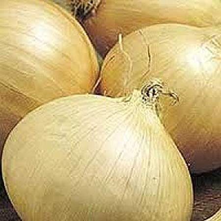 WALLA WALLA Extra Sweet Onion Seeds Extra Large 50 Seeds Yellow Skinned
