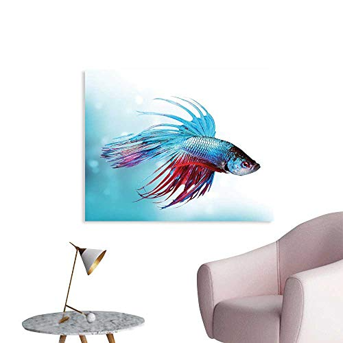 (J Chief Sky Aquarium Wall Sticker Decals Siamese Fighting Betta Fish Swimming in Aquarium Aggressive Sea Animal Poster Home Decoration W28 xL20 )