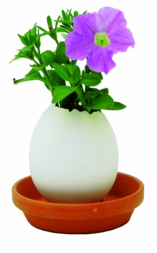 Noted Eggling  - Crack & Grow - Petunia