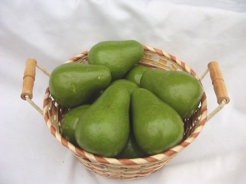 HEMISPHERE TRADING IMPORTS 12 Piece Avocado Decorative Fruit by HEMISPHERE TRADING IMPORTS