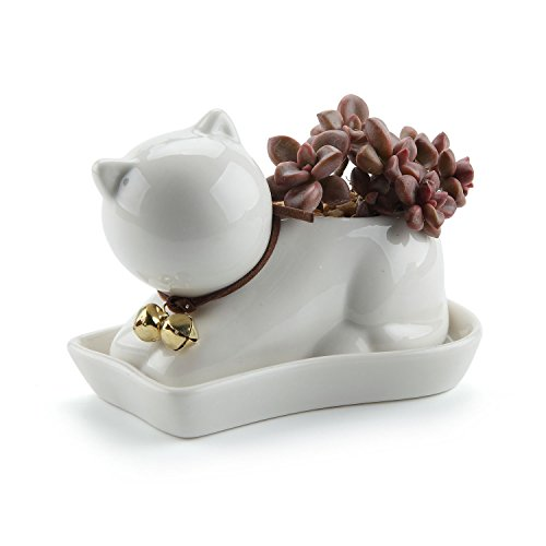 T4U Lazy Cat Design Ceramic Succulent Plant Pot / Cactus Flower Pots Container Porcelain Holder Planter Decoration with Golden Bell and Tray - Pack of 1