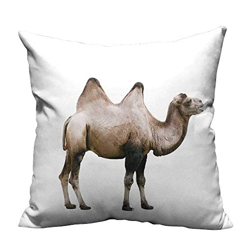 Zippered Pillow Covers Domestic Bactrian Camel (Camelus bactrianus) Cut Out on White Background Decorative Couch(Double-Sided Printing) 26x26 inch]()