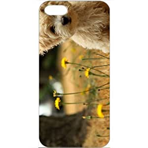 DIY Apple iPhone 5 Case Customized Gifts Personalized With Animals havanese silk dog Animals Birds Cute Animals...