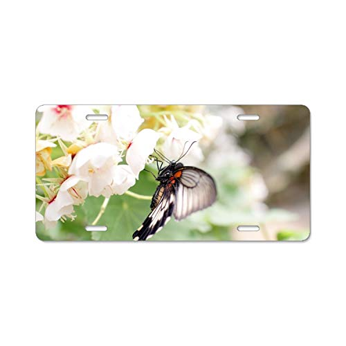 (Yantani Best Design Cool Flowers Free Wallpaper Insect Metal License Plate for Car (New) 12