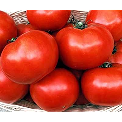 Florida 91 F1 Hybrid Tomato Seeds (40 Seed Pack) : Garden & Outdoor