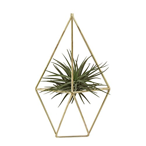 Rustic Wall Mount Hanging Irregular Pentagon Geometric Metal Tillandsia Air Plants Holder Rack Black Wall Accent Decor (Gold) No Plants