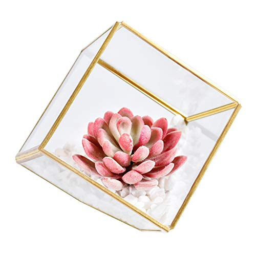 AINOLWAY Cute Artificial Succulent Plants with Stones in Glass Planter Pot for Home Office Table Decor