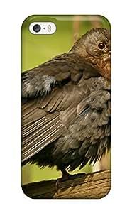 Durable Blackbird Female Bird Animal Bird Back Case/cover For Iphone 5/5s