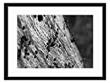Wood Framed Canvas Artwork Home Decore Wall Art (Black White 20x14 inch) - Insect Hymenoptera Ant Red Wood Ant Formica Rufa