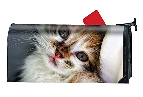 - BABBY Custom Magnetic Mailbox Cover Mail Wrap for Standard Mailboxes Cover-Spoiled Kitty