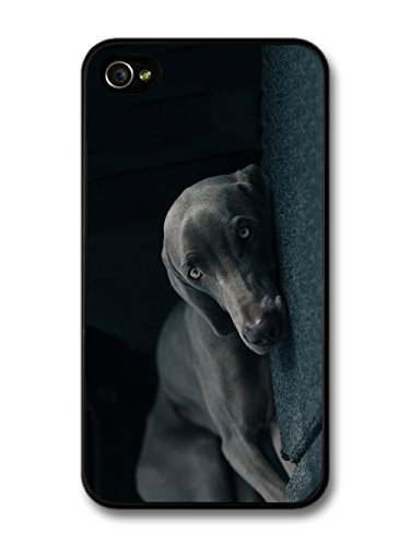 Weimaraner Dog Cute Cool Sleepy Black Dog Blue Eyes case for iPhone 4 4S