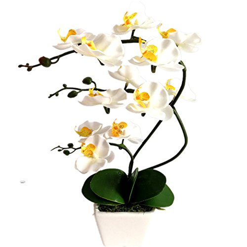 Orchid Flower Phalaenopsis (YSZL 15