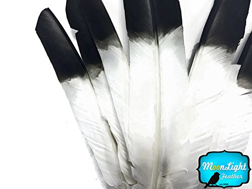- Turkey Feathers, 6 Pieces Turkey Pointers 'Imitation Eagle' Wing Large Feathers Black Tipped
