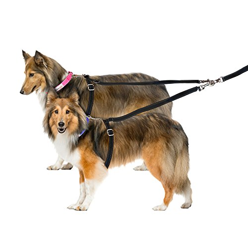ThunderLeash for 2 Dogs