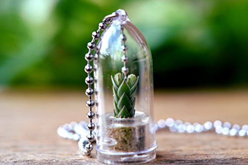 Buddhas Temple Terrarium Necklace Succulent