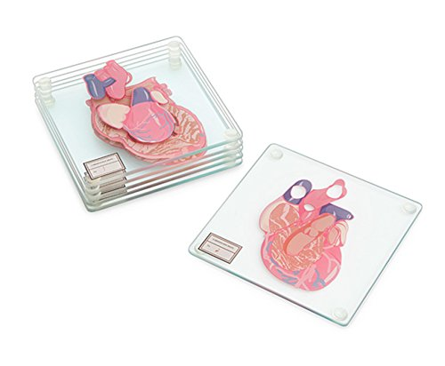 Anatomic Heart Specimen 6-Piece Coaster Set